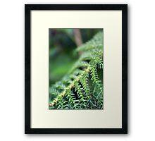 Greens Framed Print