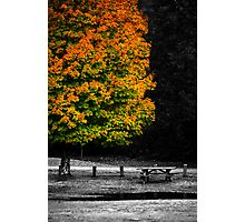 Autumn Table Photographic Print