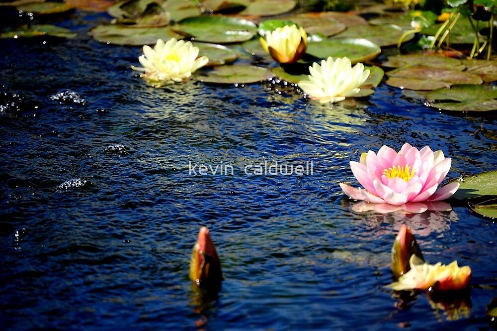 Dharma by kevin  caldwell