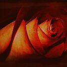 Antique Rose  by Barbara Gerstner