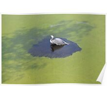 Bird on the Pond 3 Poster