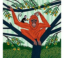 The Orangutan in The Orange Trees Photographic Print