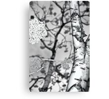 mountain ash berries Canvas Print
