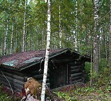 Shed in Birchwood by tanmari