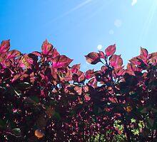 Sunshine and Pink by Sami Mick