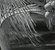 coconuts by jackson photografix