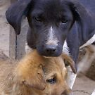 Nepal Street Dogs by Betsy  Seeton