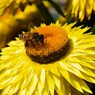 Bumblebee Problem by Andrew Hillegass