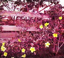 purple blossom by mark thompson