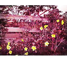 purple blossom Photographic Print