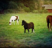 Three Ponies by Lynn Starner