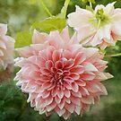 In the garden by Lynn Starner