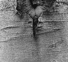 wooden heart by richman