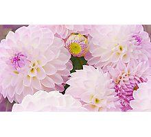 Sweet, Sweet Dahlias Photographic Print