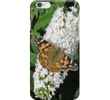 Painted Lady butterfly on white buddleia for iPhone iPhone Case/Skin