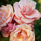 Pink Roses II by Lynn Starner
