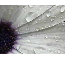 Daisy Blink Photographic Print