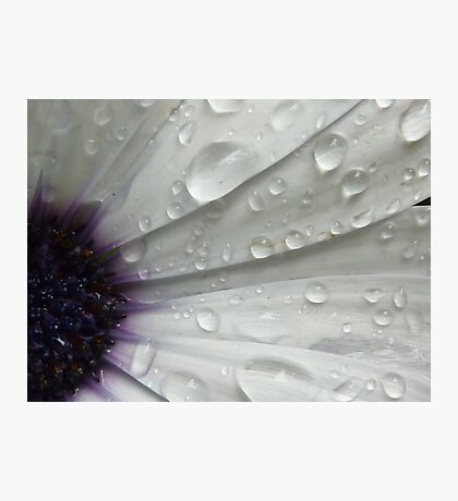 Daisy Blink Photographic Print