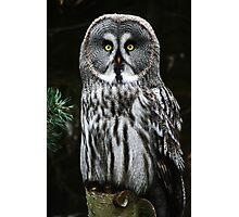 The Great Grey Owl Photographic Print
