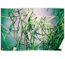 Moorland Pool Poster