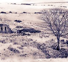 Ruined farmstead by wildscape
