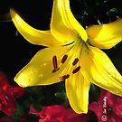 jaune et rouge by © Joe  Beasley IPA