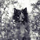Jungle Cat by Josie Eldred