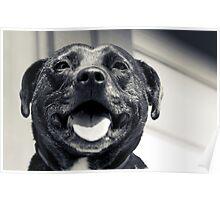 Bullie Smiles Poster