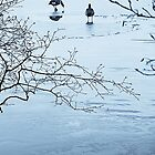 Geese on Ice by Gillian Cross