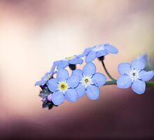 Gentle Flowers by Josie Eldred