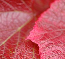 Red Leaves by Gillian Cross