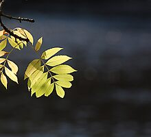 Leaves by Gillian Cross