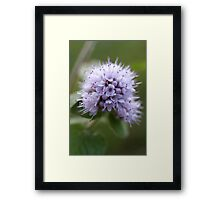 Water Mint Framed Print