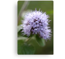 Water Mint Canvas Print
