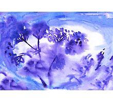 Violet flowers Photographic Print