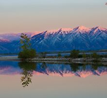 Mirror by Andrew Masterson