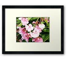 Oleander from Espana Framed Print