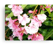 Oleander from Espana Canvas Print