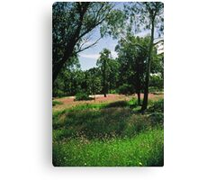 Everlastings in Kings Park Canvas Print