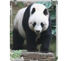 Special Giant Panda Bear