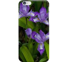 i Dwarf Crested Iris iPhone Case/Skin