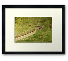 Spotted Sandpiper on the Kinnickinnic River Framed Print
