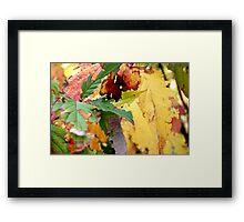 Autumn puzzle Framed Print
