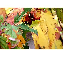 Autumn puzzle Photographic Print