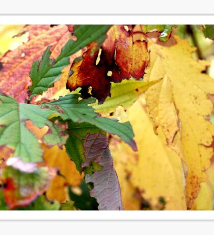 Autumn puzzle Sticker