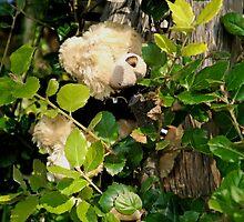 Sunlit Ted............Lyme Dorset UK by lynn carter