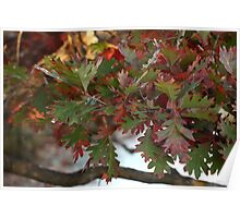 Red and Green Leaves over the Oconomowoc River Poster