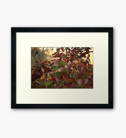 Red and Green Fall Leaves II Framed Print
