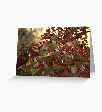 Red and Green Fall Leaves II Greeting Card