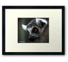 Just looking for you  Framed Print